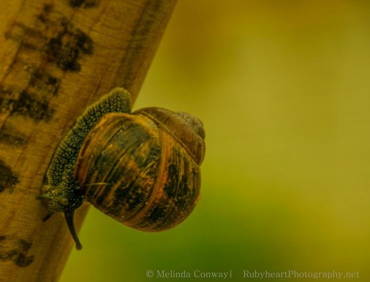 snail crop