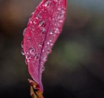 velvet-droplets