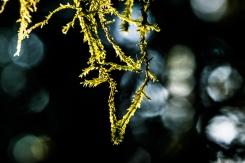 velvet-moss-glow