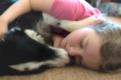 velvet-puppy-snuggles